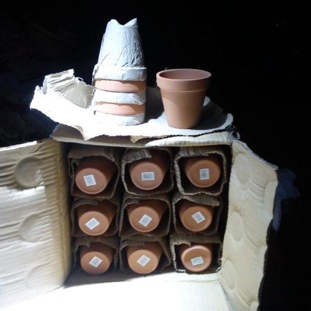 Plant Pots in Bulk